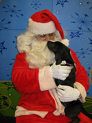 Santa and puppy
