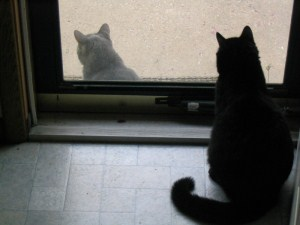 cats watching each other