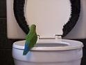 potty parrot