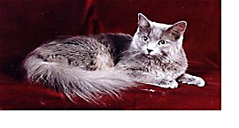 The Nebelung Cat