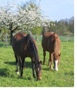 Purina's Precautionary Pet Food Recall Affects Horses, Goats