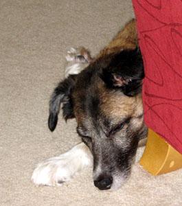 Zoe snoozing just around the corner.  Photo courtesy of MCA Hogarth.