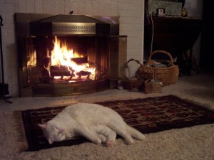 kitty by fire