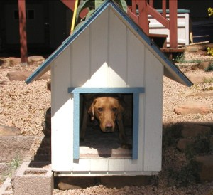 Indoor Dog House For Storms
