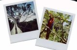 polaroid prints instant photographs