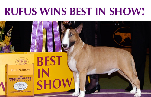 Photo courtesy of the Westminster Kennel Club